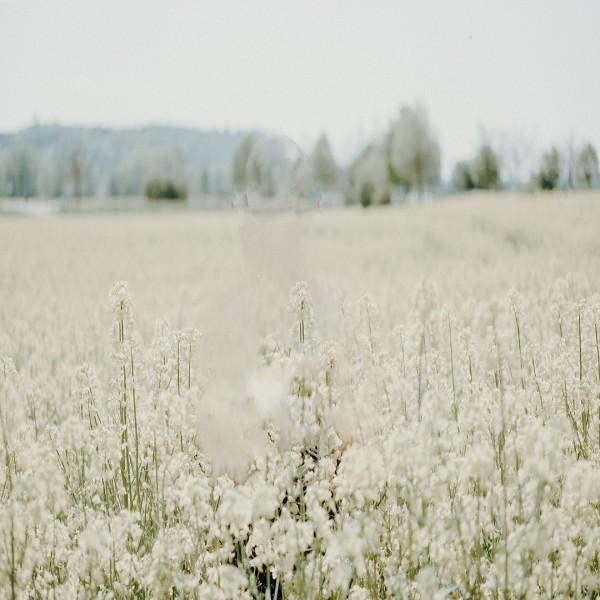 Allergien_Hintergrund_1080