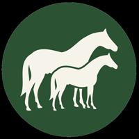 Pferdetypen & Reitweisen