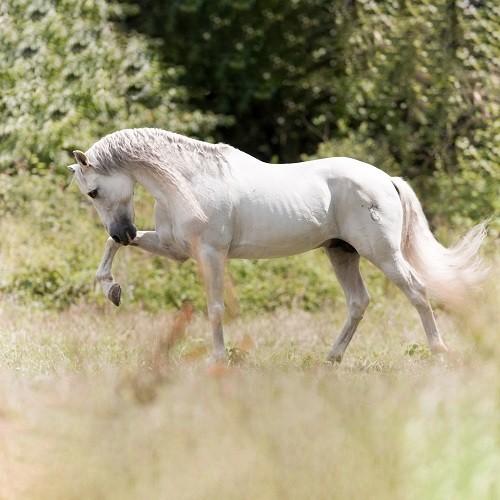 mageres-Pferd_jpeg-_klein