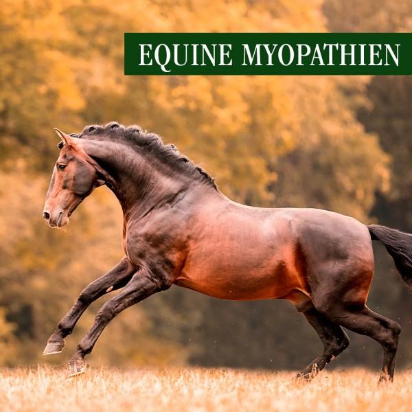 EquineMyopathien
