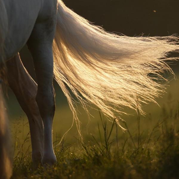 Kotwasser_Pferd