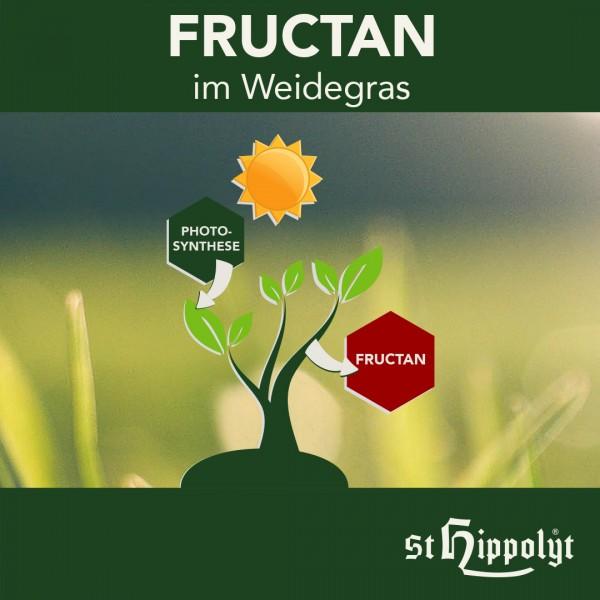 Fructan_1